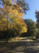 My little neighborhood. So magestic.
